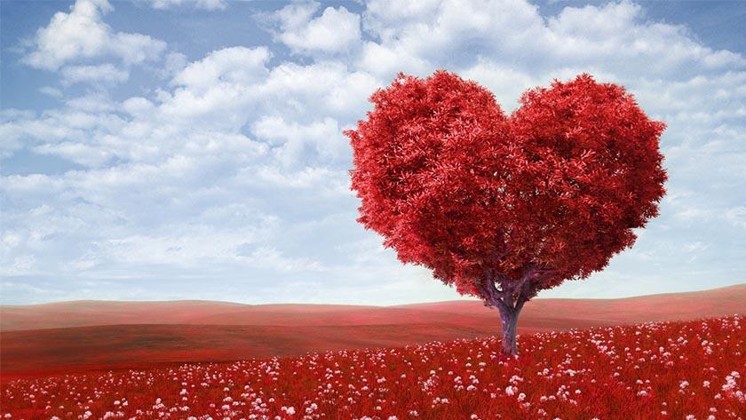 Le proposte per San Valentino